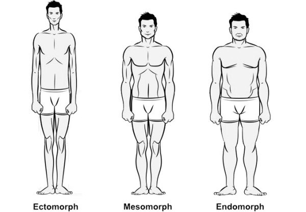 Ectomorph Mesomorph and Endomorph