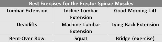 Best Exercises For The Erector Spinae Muscles