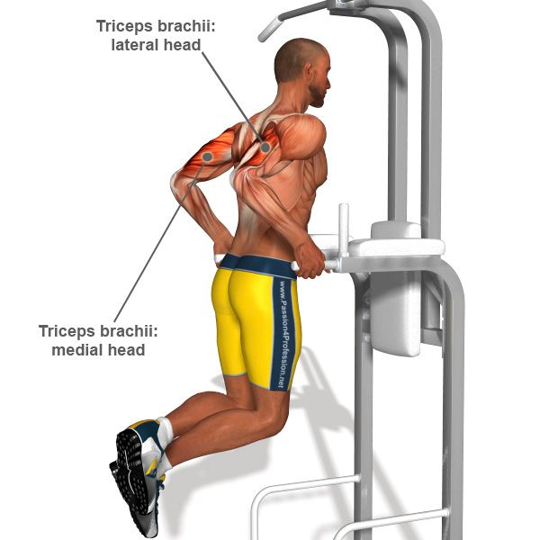 Bodyweight triceps dips