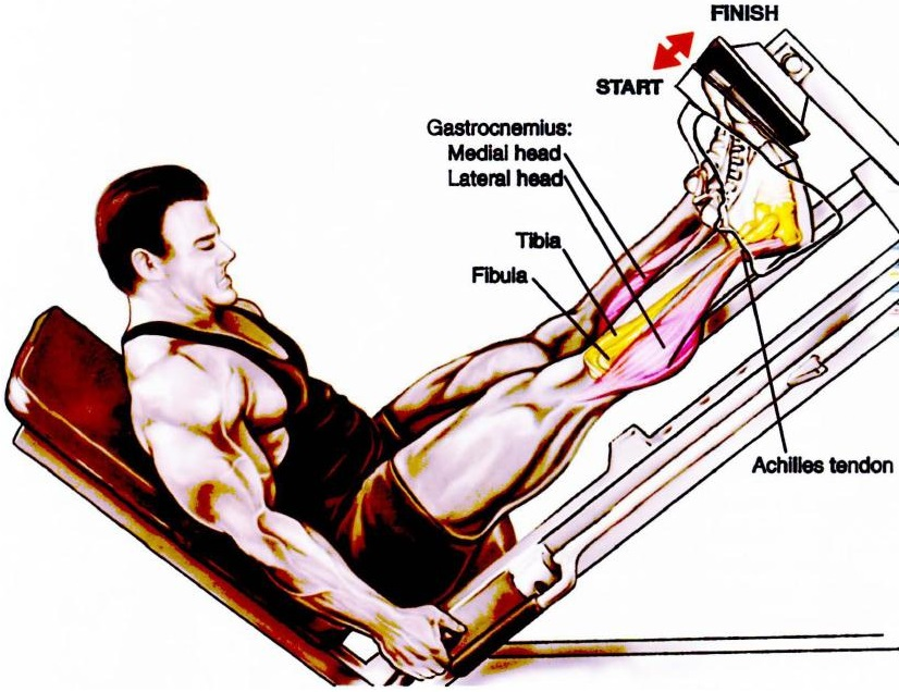 Leg press calf raise (three foot positions)