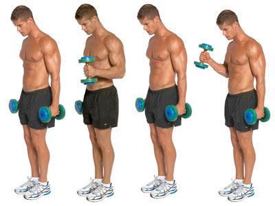 Standing Hammer Dumbbell Curl Exercise