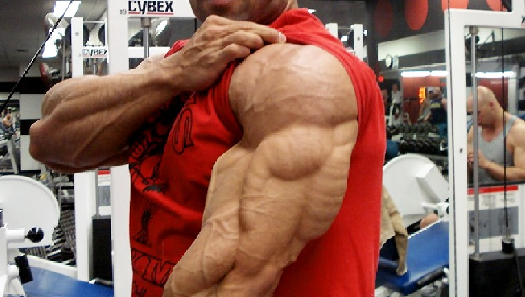 Meet Your Arm Muscles – Triceps Brachii • Bodybuilding Wizard