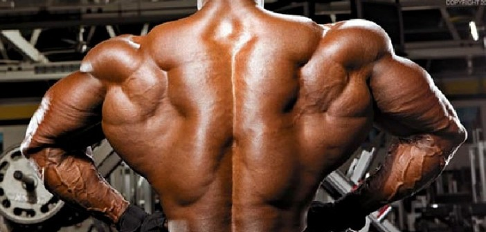 Lower Back Muscles Anatomy