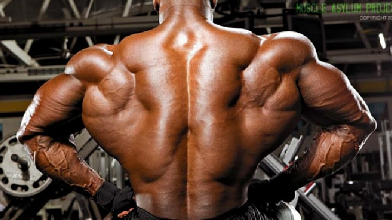 Deep Muscles Of The Back Erector Spinae Bodybuilding Wizard