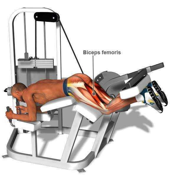 Lying Leg Curl Exercise