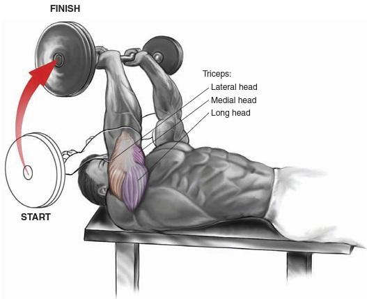 EZ-Bar Lying Triceps Extension