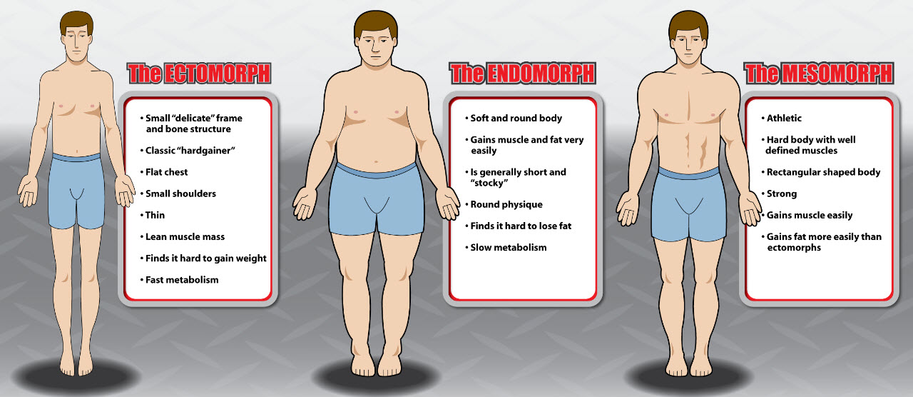 Body mean what type does stocky The Three