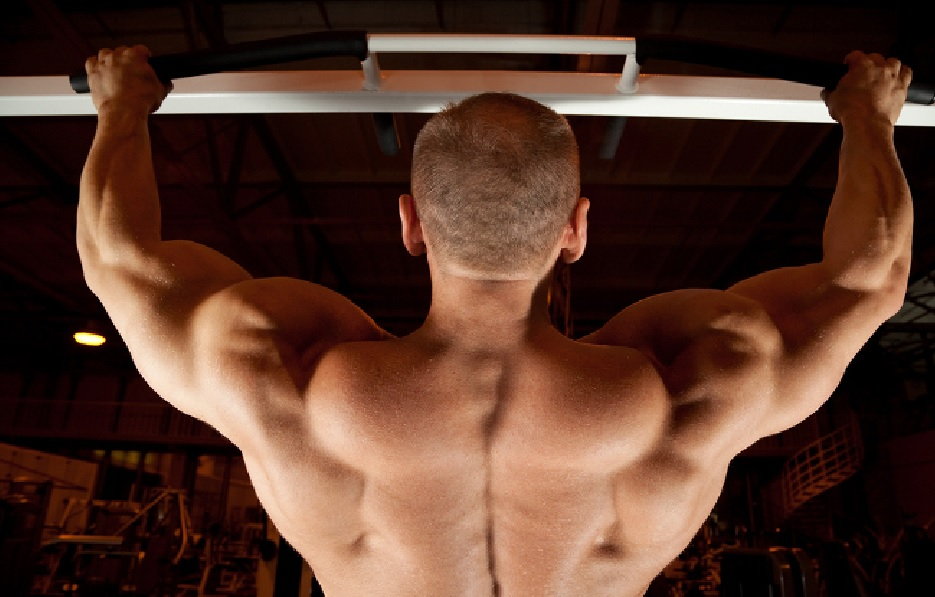 The Anatomy Of The Back Muscles Bodybuilding Wizard