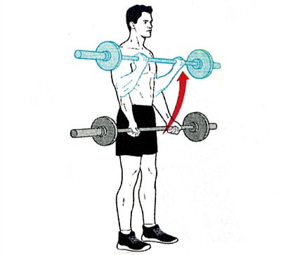 Straight bar standing biceps curl