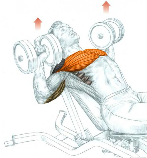 Single Arm Dumbell Bench Press: Incline Dumbbell Bench Press • Bodybuilding Wizard