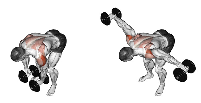 bent-over laterals: muscles worked