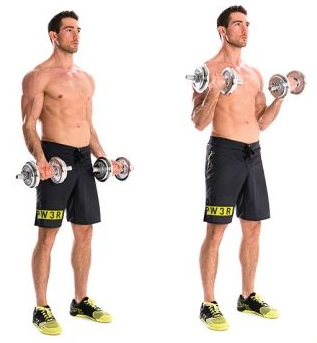 Standing dumbbell biceps curl - without supination, two arms