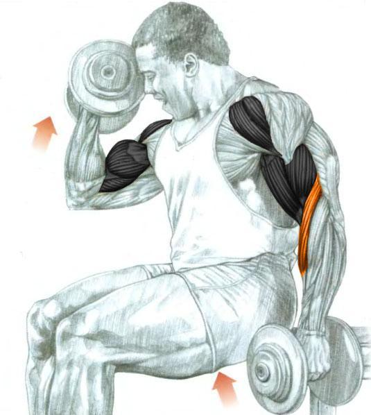 Supinating Dumbbell Biceps Curls Bodybuilding Wizard