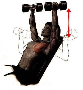 Variable-Grip Incline Dumbbell Bench Press