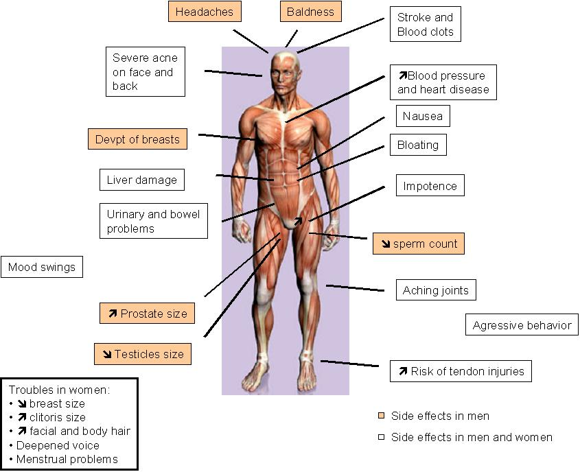an analysis of steroids and their effects on the human body Athletes who use anabolic steroids get larger and stronger muscles how this is reflected at the level of the muscle fibers has not yet been established and was the topic of this investigation.
