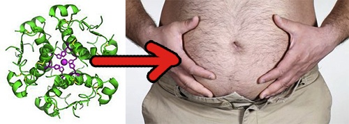 insulin helps fat storage
