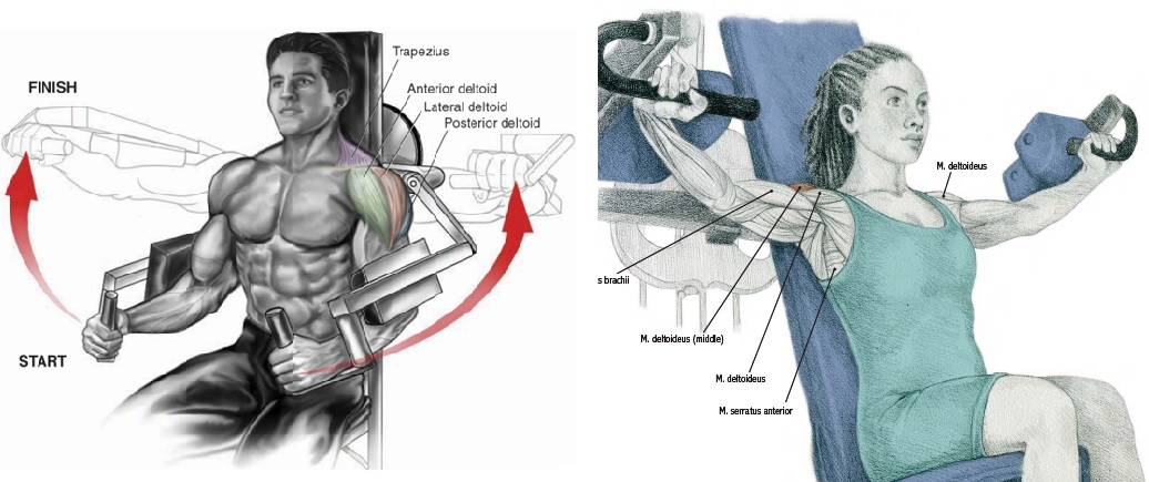 Types of Lateral Raise Machines