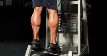 calf muscles anatomy
