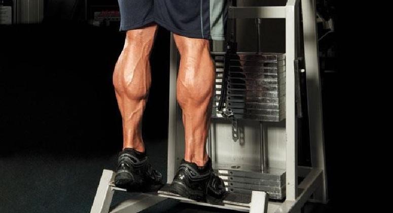 Calf Muscles • Bodybuilding Wizard