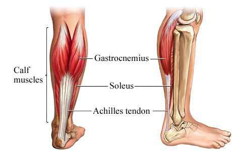 The Anatomy of the Calf Muscles