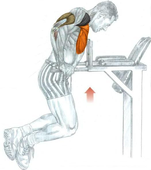 Chest Dips Exercise
