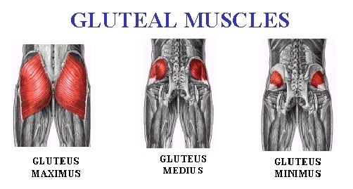 how to work lower glutes