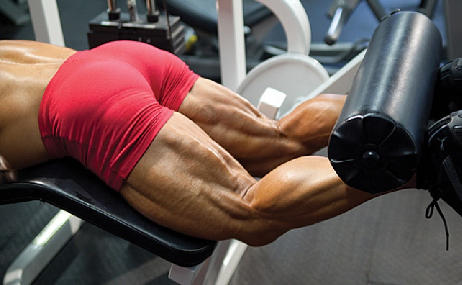 Hamstring Muscles Functional Anatomy Guide Bodybuilding Wizard