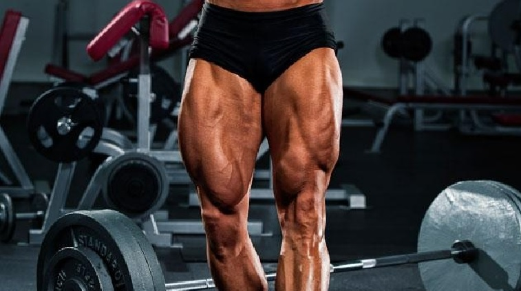 Quadriceps Muscle Strong Quadriceps Muscles