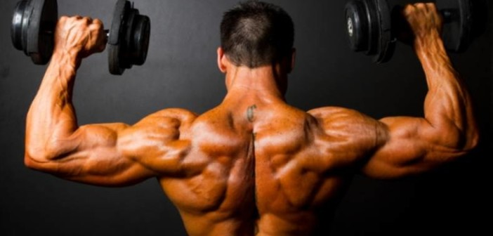 Anatomy of the Shoulder Muscles