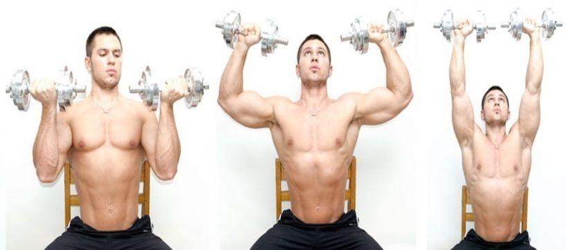 Arnold Dumbbell Press Bodybuilding Wizard