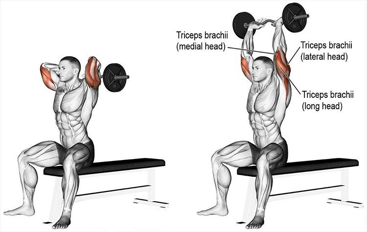 Seated E-Z bar overhead triceps extension
