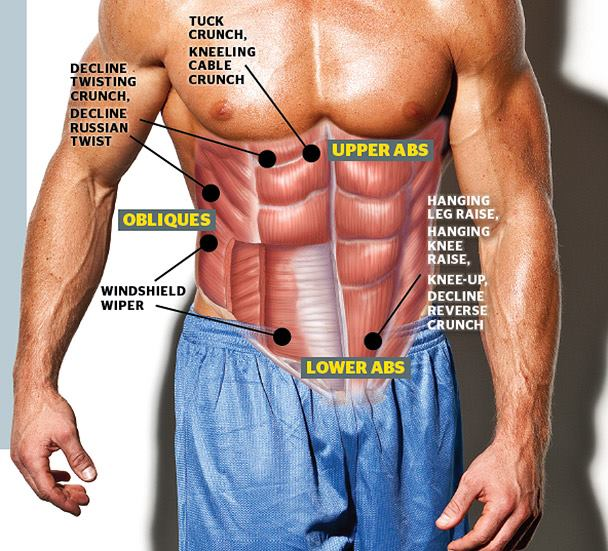 Meet Your Muscles: Abdominal Muscles Anatomy • Bodybuilding Wizard