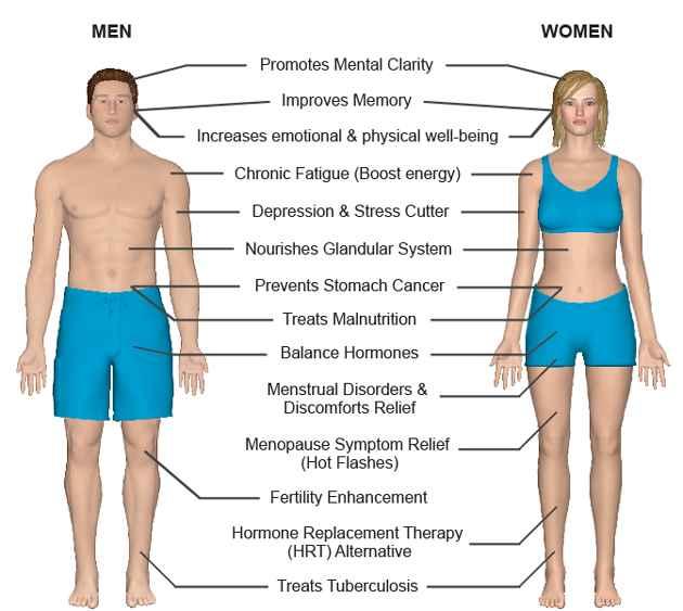 Possible Health Benefits of Maca