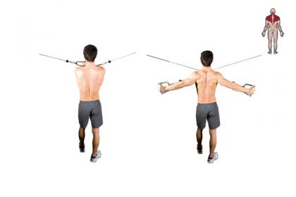 Rear Deltoid Cable Fly