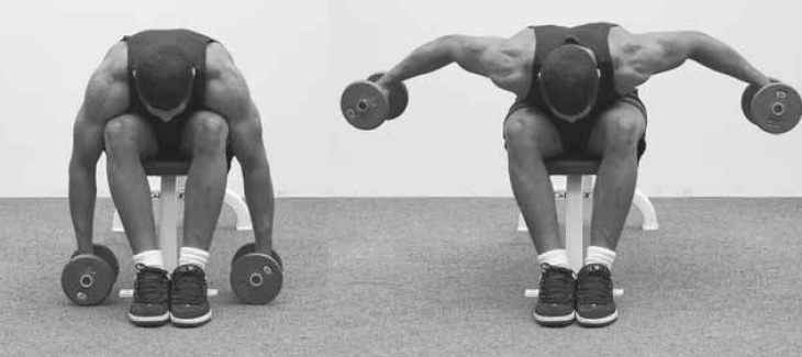 seated bent-over dumbbell lateral raise