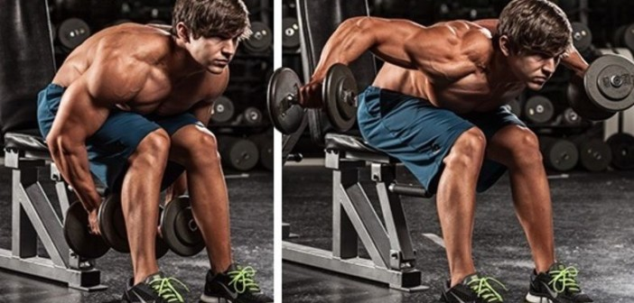 Seated Bent-Over Dumbbell Raise