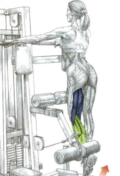 Hamstrings Exercise - Standing Leg Curl