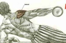 Dumbbell Incline Lateral Raise
