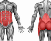 Bodybuilding Anatomy: Core Muscles