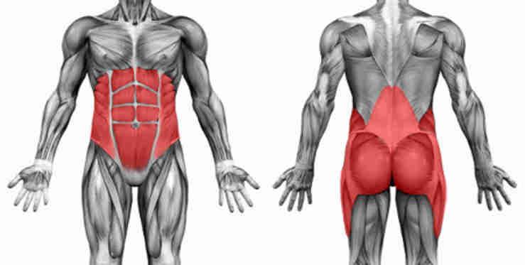 Bodybuilding Anatomy: Core Muscles • Bodybuilding Wizard