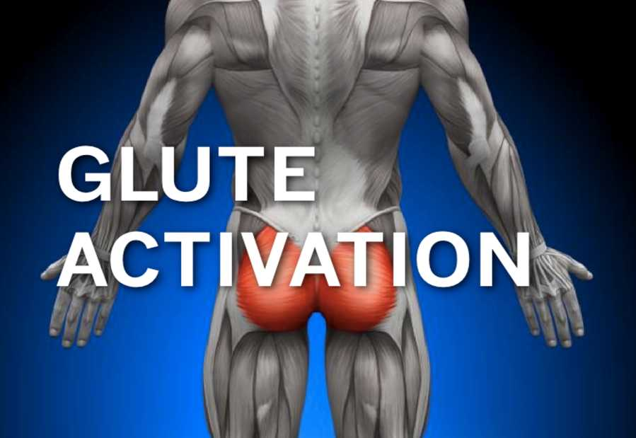 Muscles of the Gluteal Region • Bodybuilding Wizard