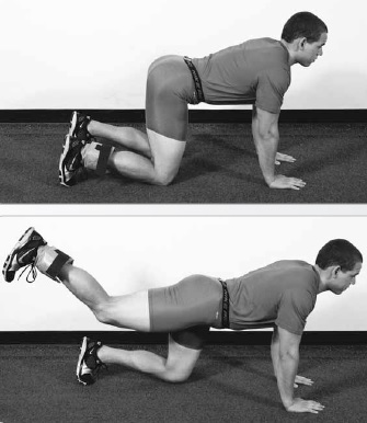 Ankle-Weight All-Fours Hip Extension