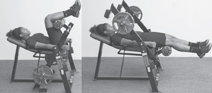 Lying Machine Hip Extension Exercise