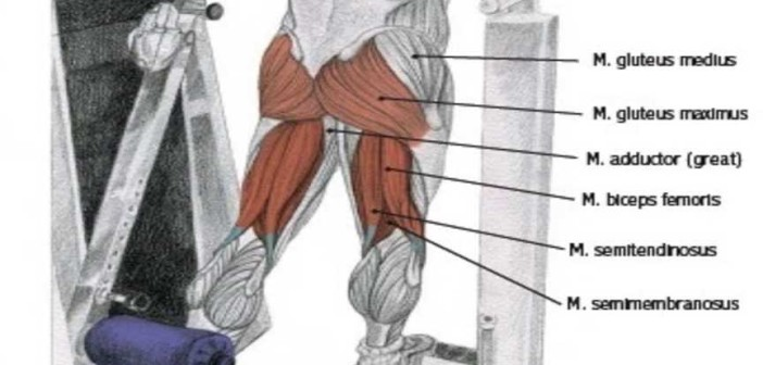 Standing Machine Hip Extension