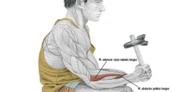 Neutral Dumbbell Wrist Curl or Radial Deviation
