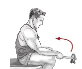 Neutral Dumbbell Wrist Curl - Radial Deviation