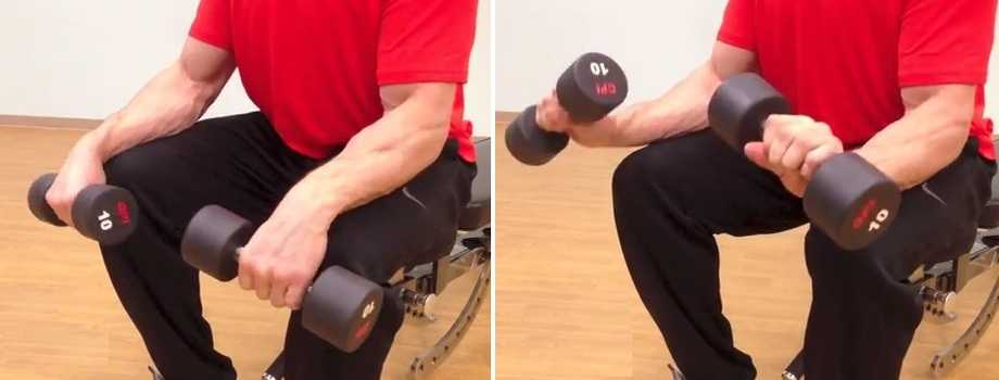 Reverse Dumbbell Wrist Curl - Dumbbell Wrist Extension