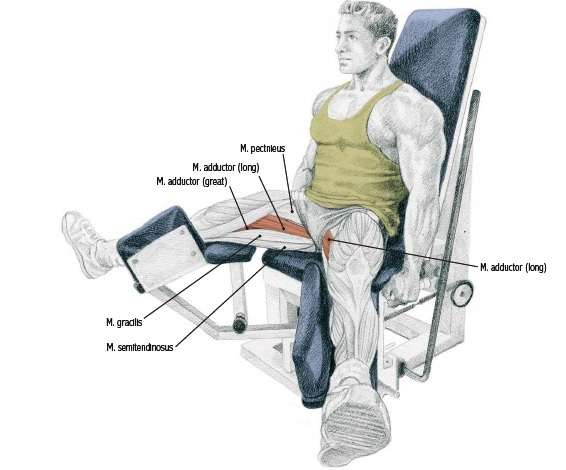 Seated Hip Adduction • Bodybuilding Wizard