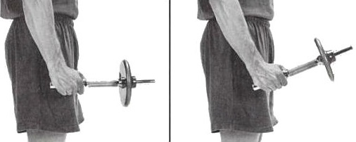 Standing neutral dumbbell wrist curl - radial deviation