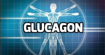 Catabolic Hormone: Glucagon